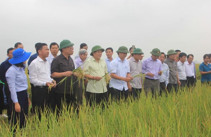 Quảng Trị: Sẽ tiến tới xây dựng Nhà máy chế biến về gạo hữu cơ