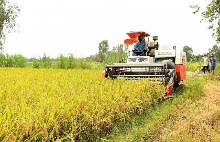 Giá lúa gạo hôm nay 6/10: Giá trong nước ổn định, giá gạo xuất khẩu bật tăng 10 USD