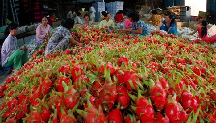 Xuất khẩu rau quả sang Lào, Hồng Kông tăng đột biến